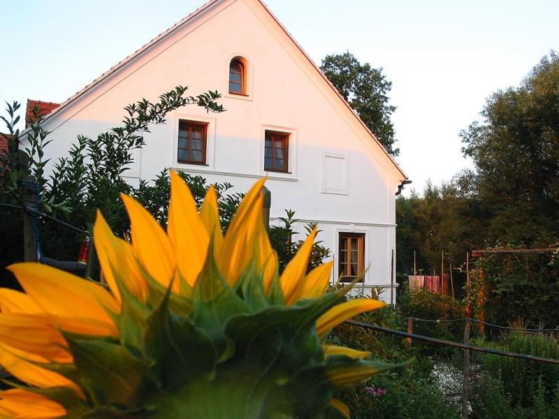 Haus mit Sonnenblume