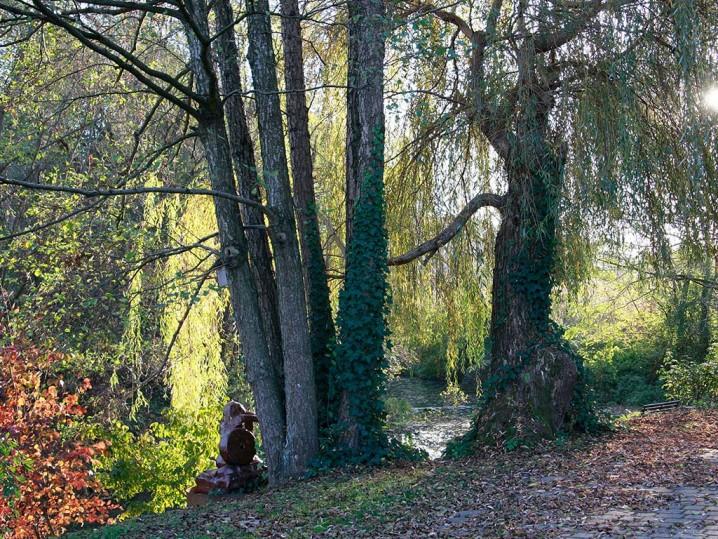 Baumgruppe vor Teich