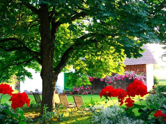 Bl�tenpracht im Garten