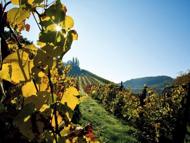 Weinbaugebiet Suedsteiermark im Herbst